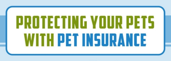 Infographic: Pet Insurance in Hong Kong - Village Insurance